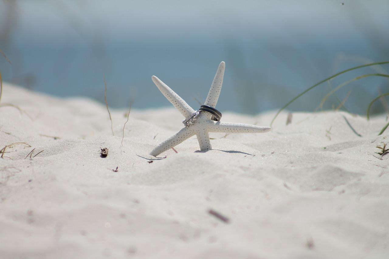 starfish-183313_1280